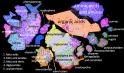 WCMC network