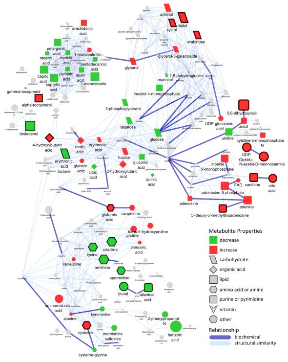 tissue network